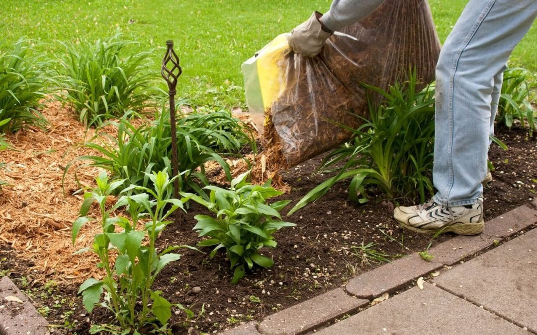 Spring Landscaping & Lawn Maintenance